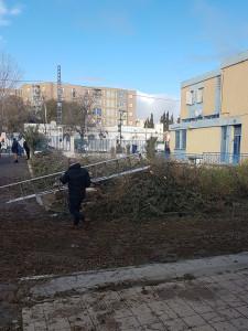 1-Abattage des sapins,Algérie Telecom Ain Oulmène le 21-02-2018