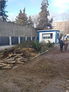 4-Abattage des sapins,Algérie Telecom Ain Oulmène le 21-02-2018