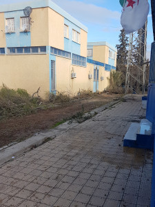 3-Abattage des sapins,Algérie Telecom Ain Oulmène le 21-02-2018