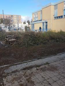 2-Abattage des sapins,Algérie Telecom Ain Oulmène le 21-02-2018